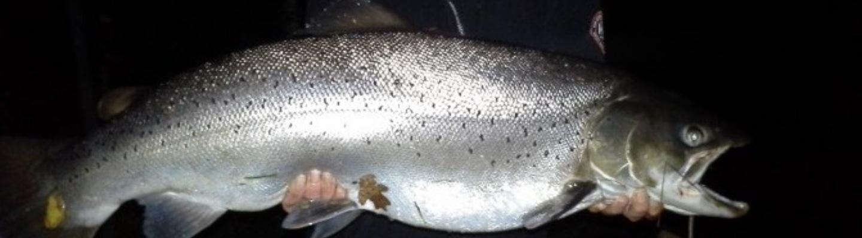 Bannerfisk.jpg
