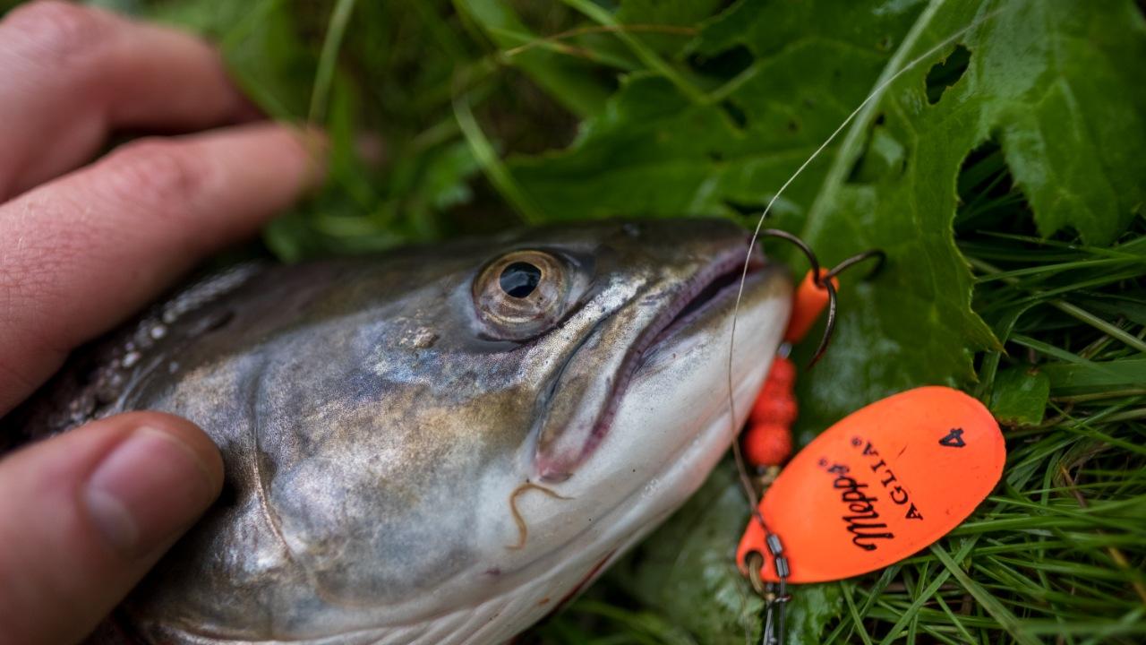 Egtved og Omegns Sportsfiskerforening
