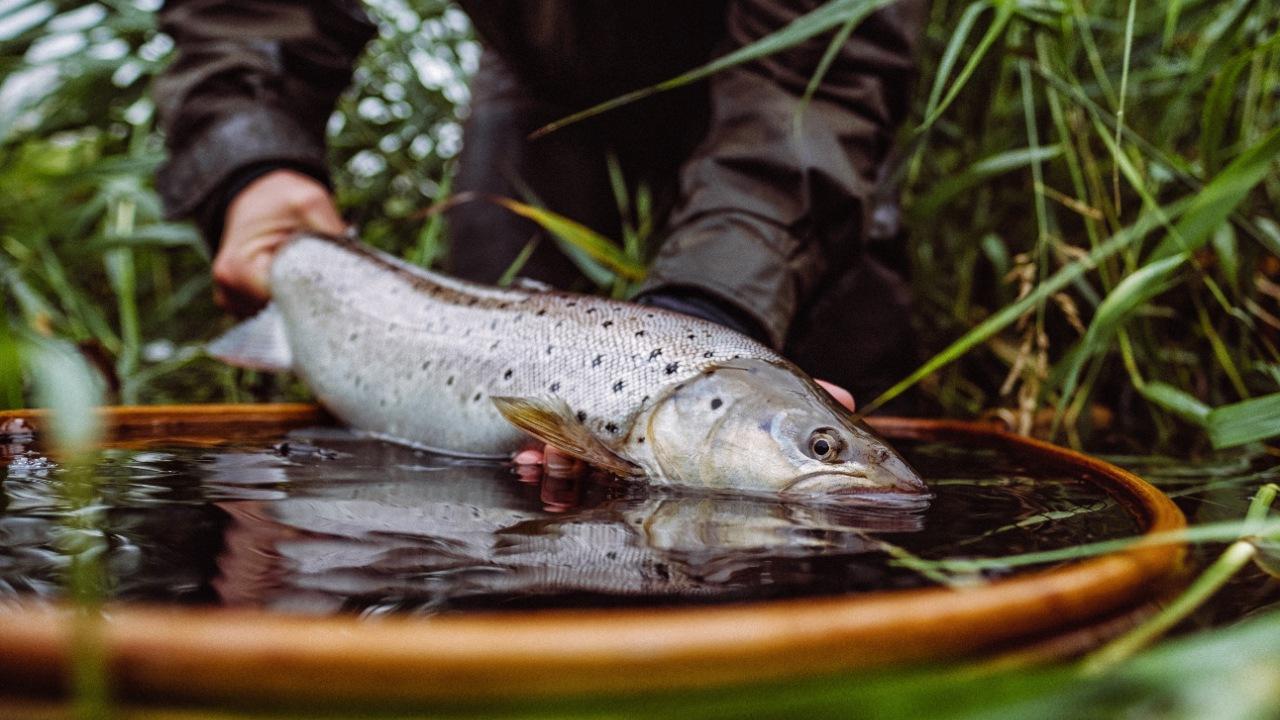 Sportsfiskersammenslutningen Nedre Ryå